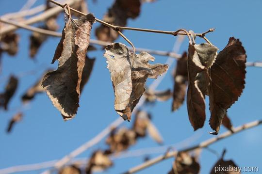 dried-87705_1280